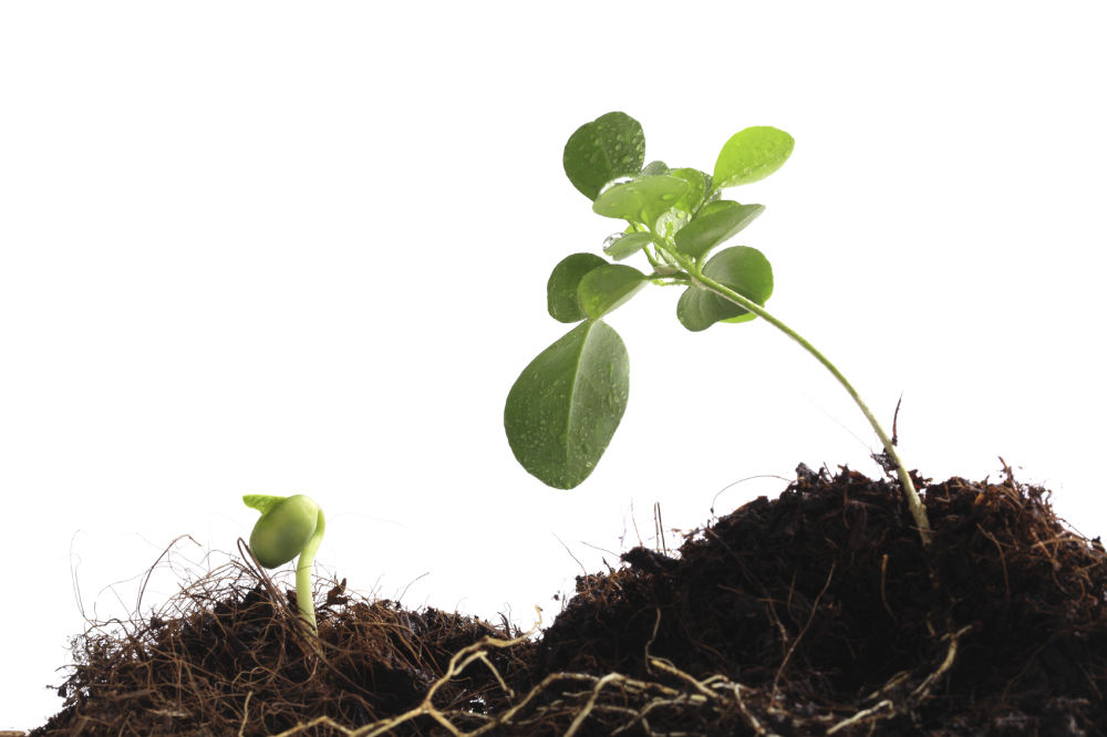 Sapling And Plant in Soil