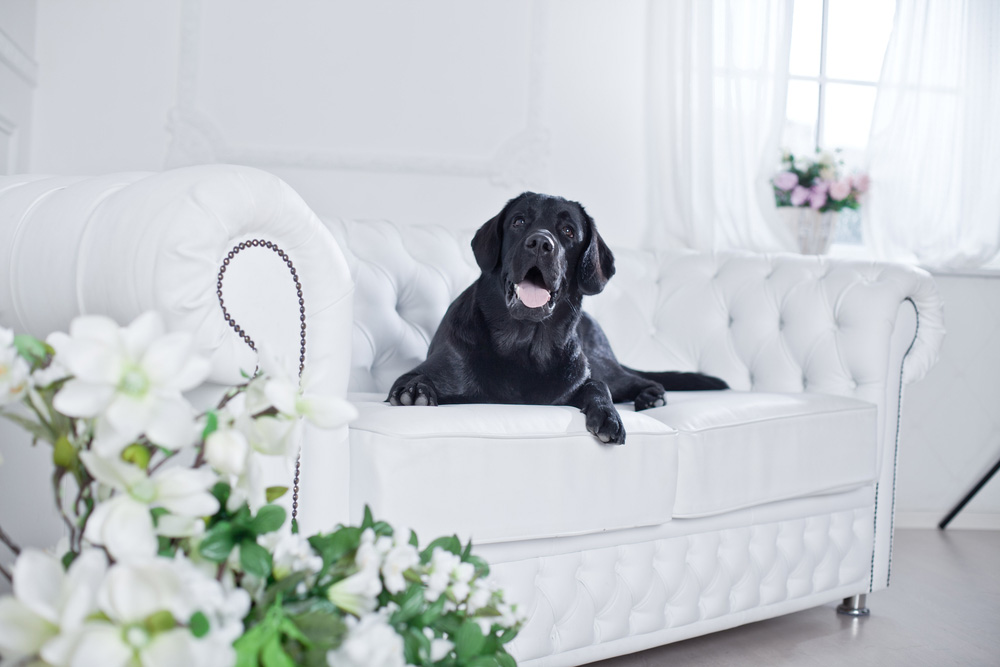 5 Design Tips to Bring Fresh Personal Style to Your Pet-Friendly Home